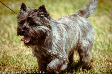 Hickories Circuit Dog Show_August 16, 2015_1024