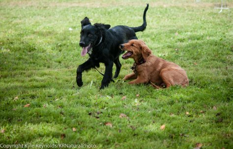 Two puppies having some play time.