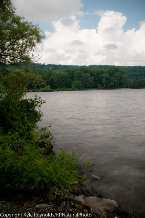 Stewart Park, Ithaca_June 26, 2014_69