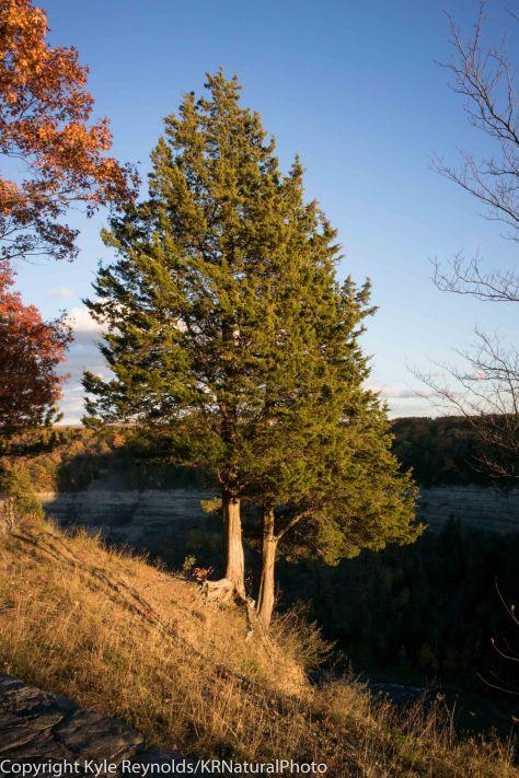 Letchworth State Park_October 25, 2015_480