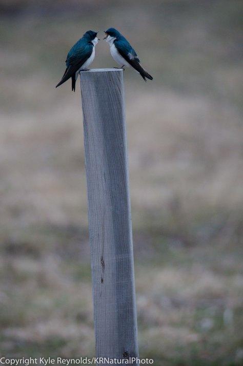Tanglewood_04-09-2011_27