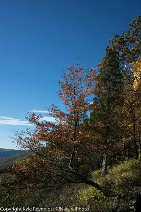 Tanglewood_October 12, 2015_363