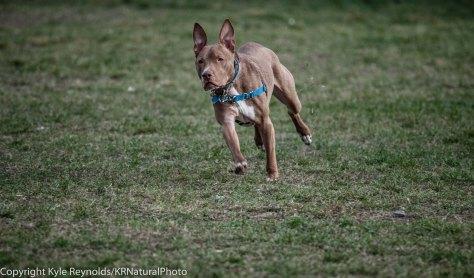 Ithaca Dog Park_November 27, 2015_105