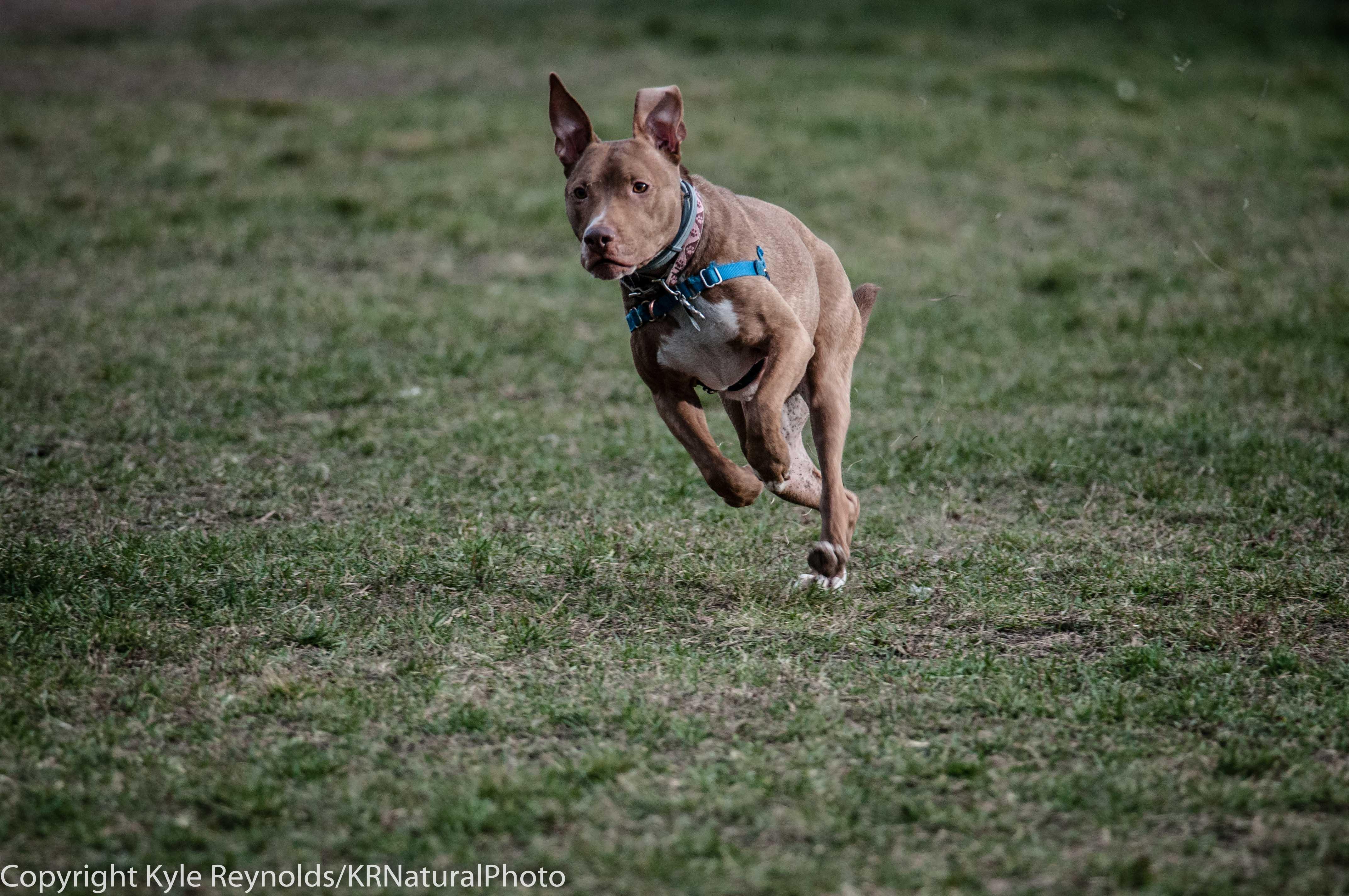 Ithaca Dog Park_November 27, 2015_106