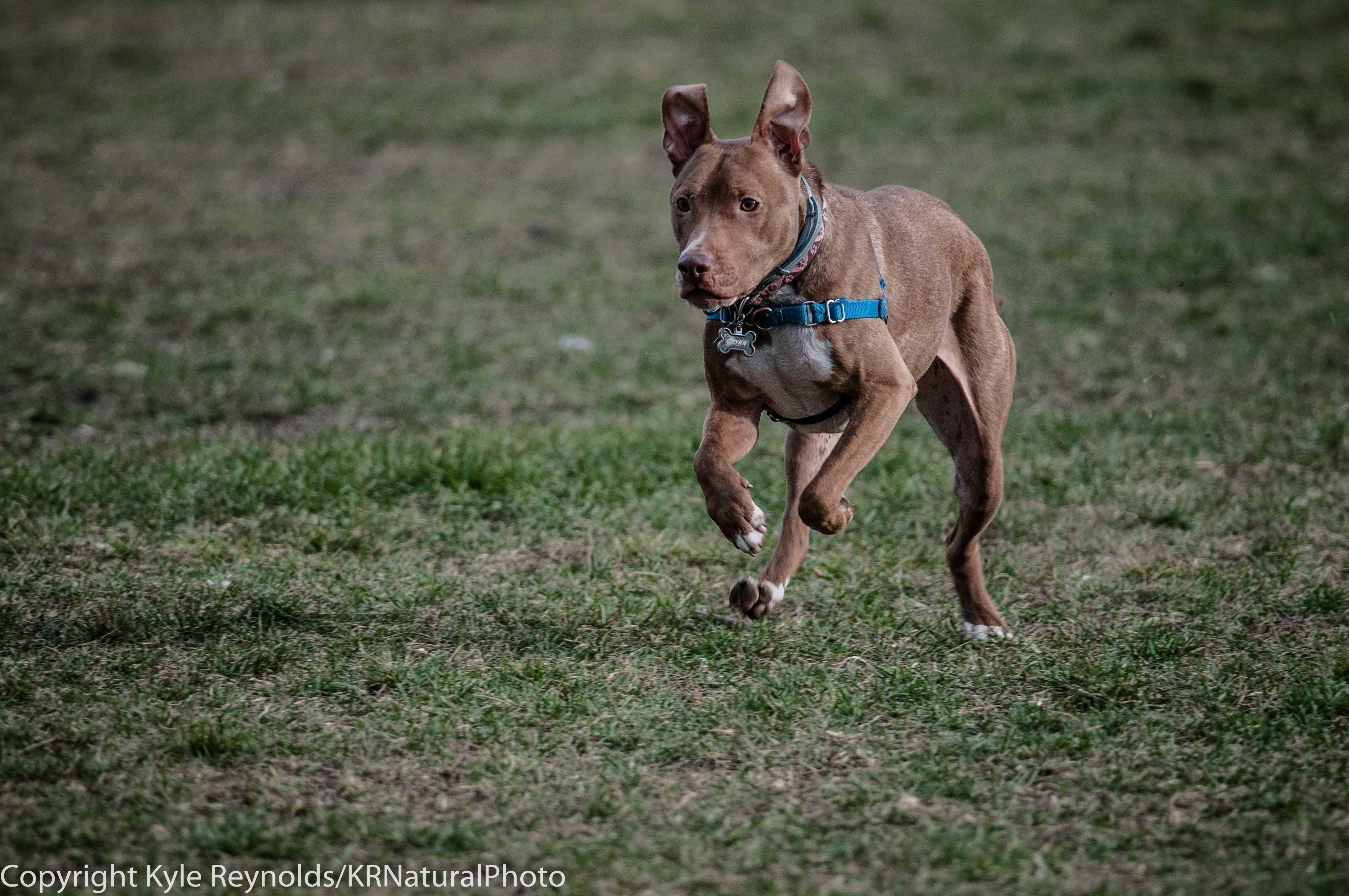 Ithaca Dog Park_November 27, 2015_108