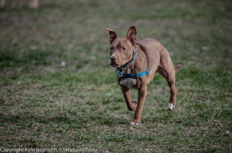 Ithaca Dog Park_November 27, 2015_109