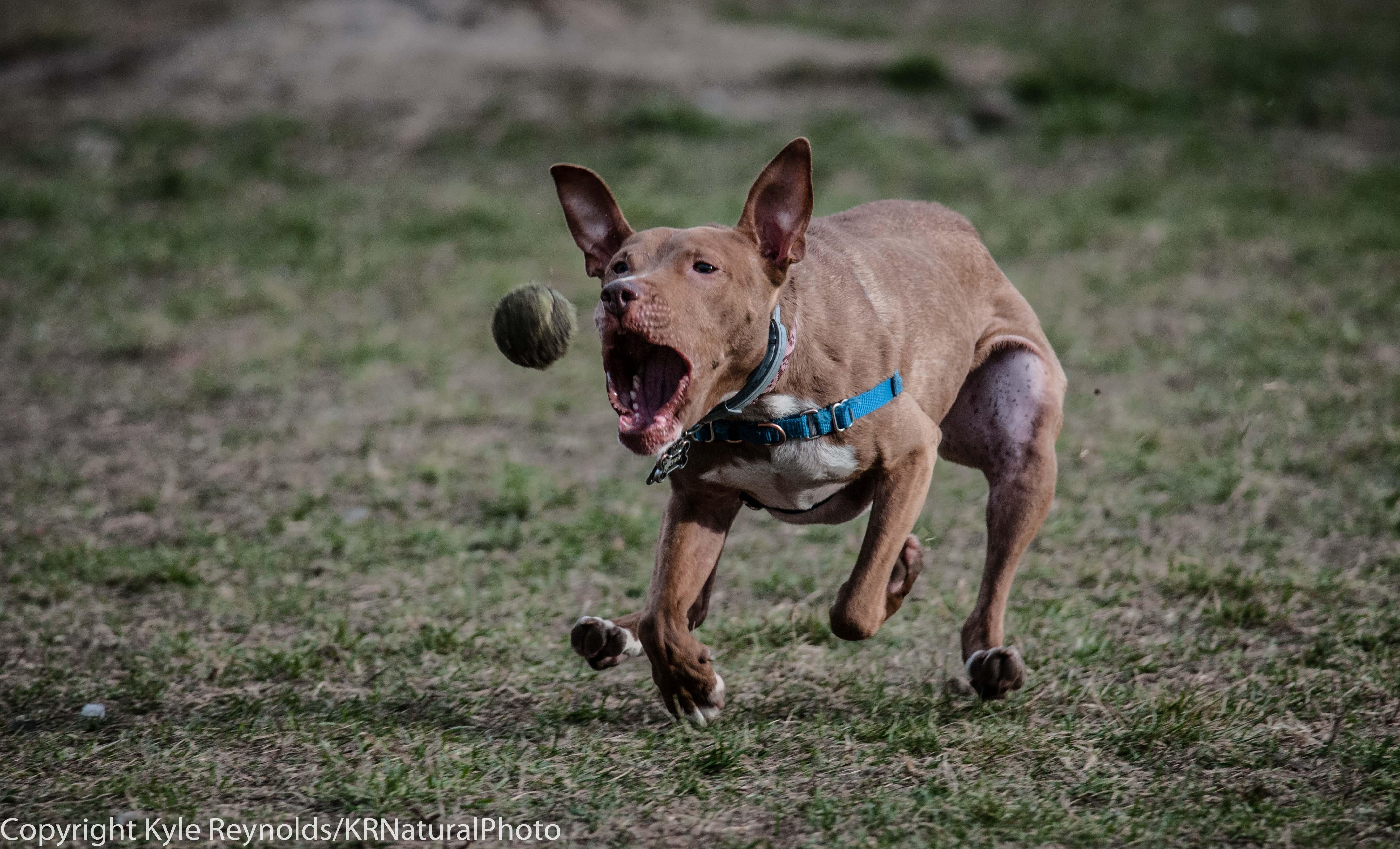 Ithaca Dog Park_November 27, 2015_111