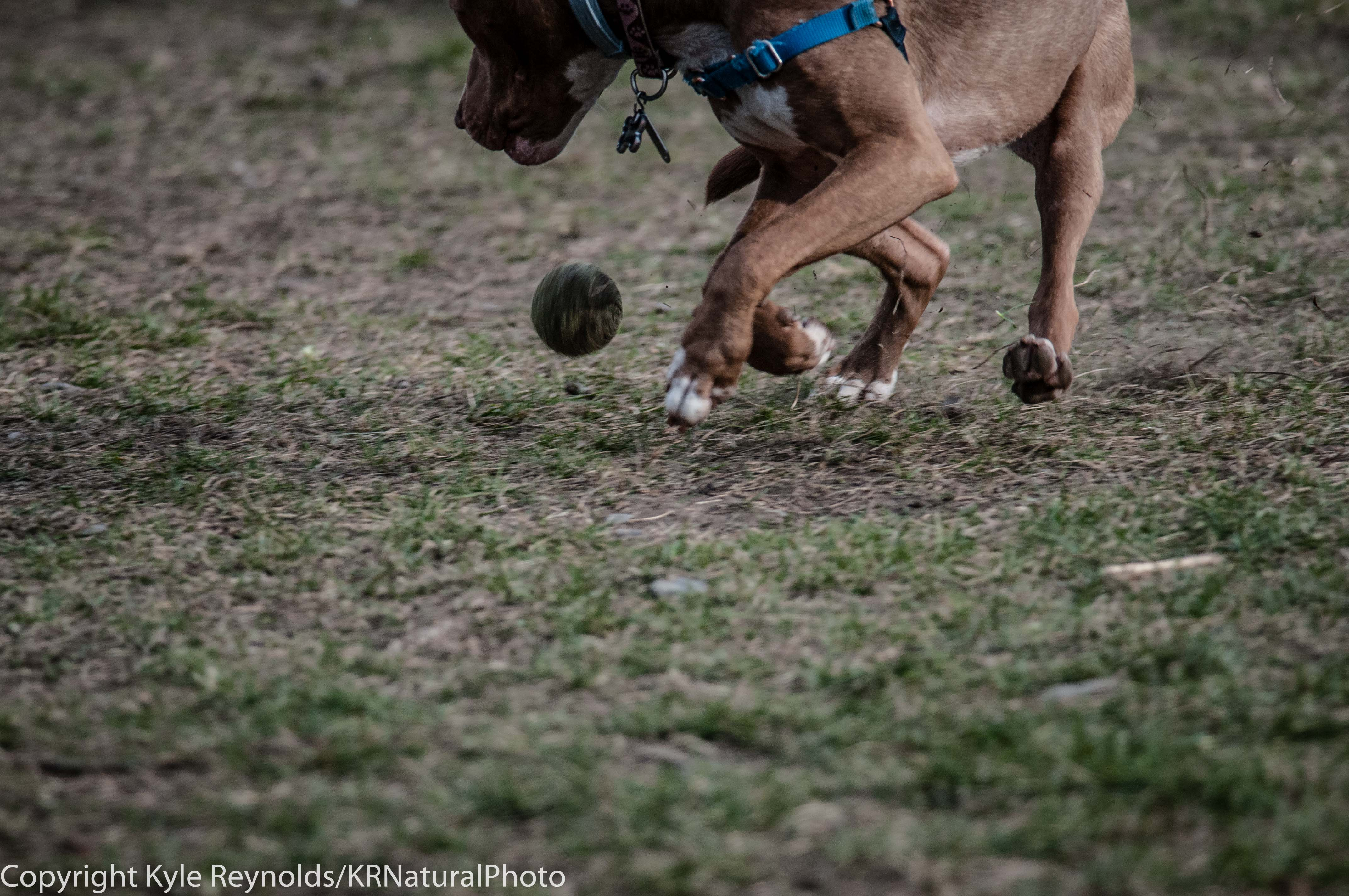 Ithaca Dog Park_November 27, 2015_114