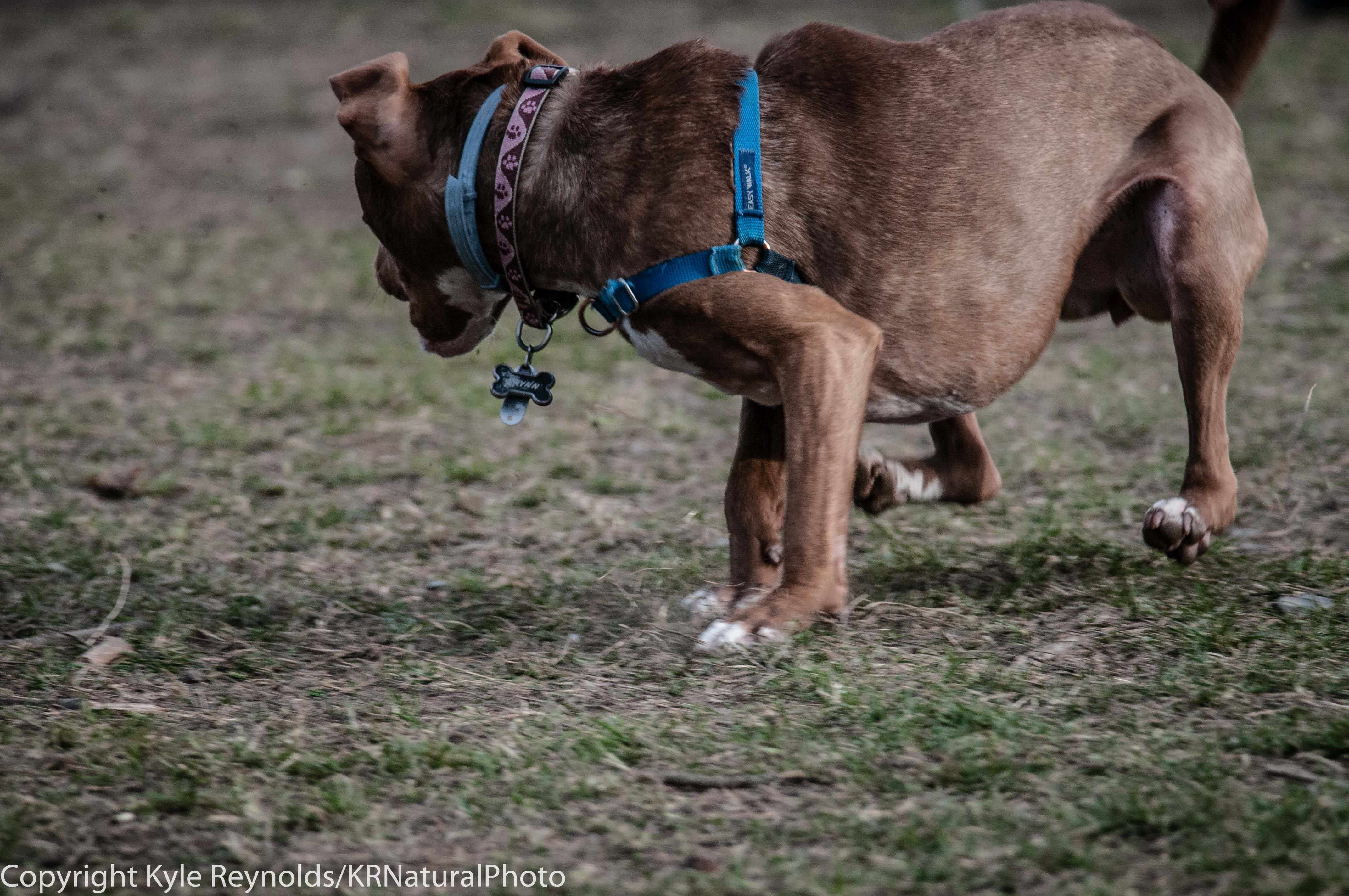 Ithaca Dog Park_November 27, 2015_115
