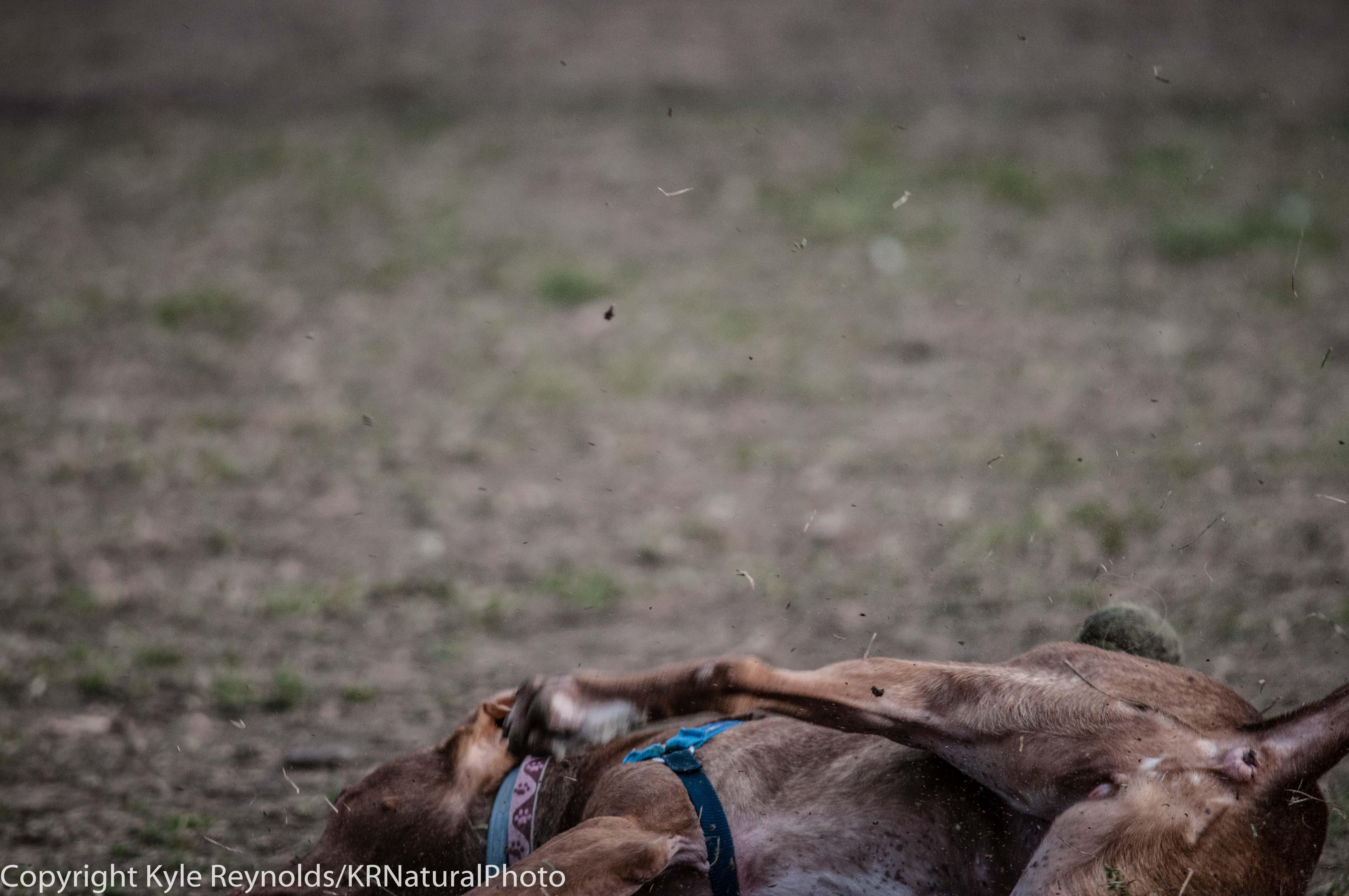 Ithaca Dog Park_November 27, 2015_118