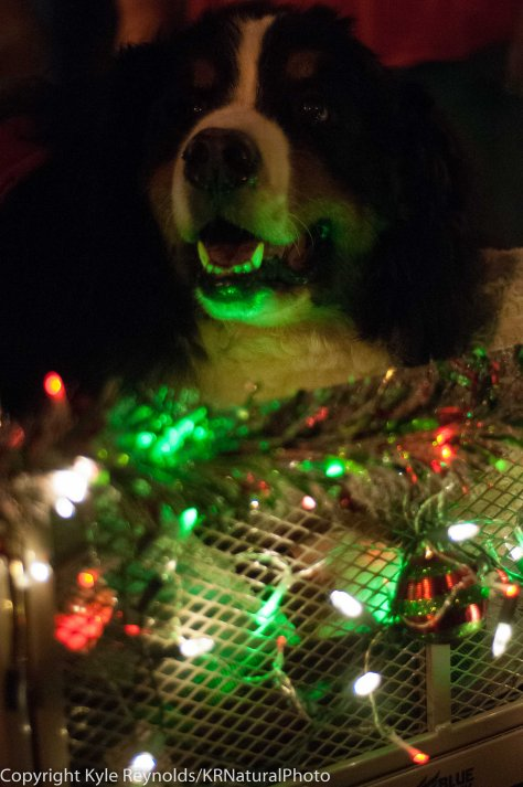 Sparkle Christmas_December 05, 2015_172
