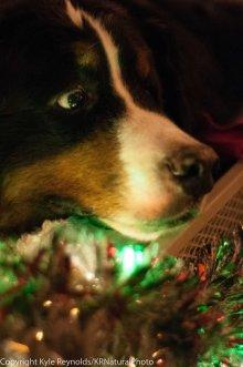Sparkle Christmas_December 05, 2015_195