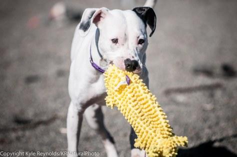 SPCA_February 29, 2016_52