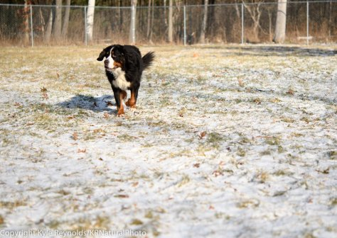 our-dogs_january-05-2017_19