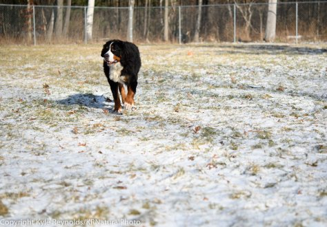 our-dogs_january-05-2017_20