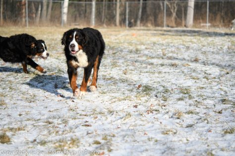 our-dogs_january-05-2017_22