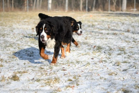 our-dogs_january-05-2017_24