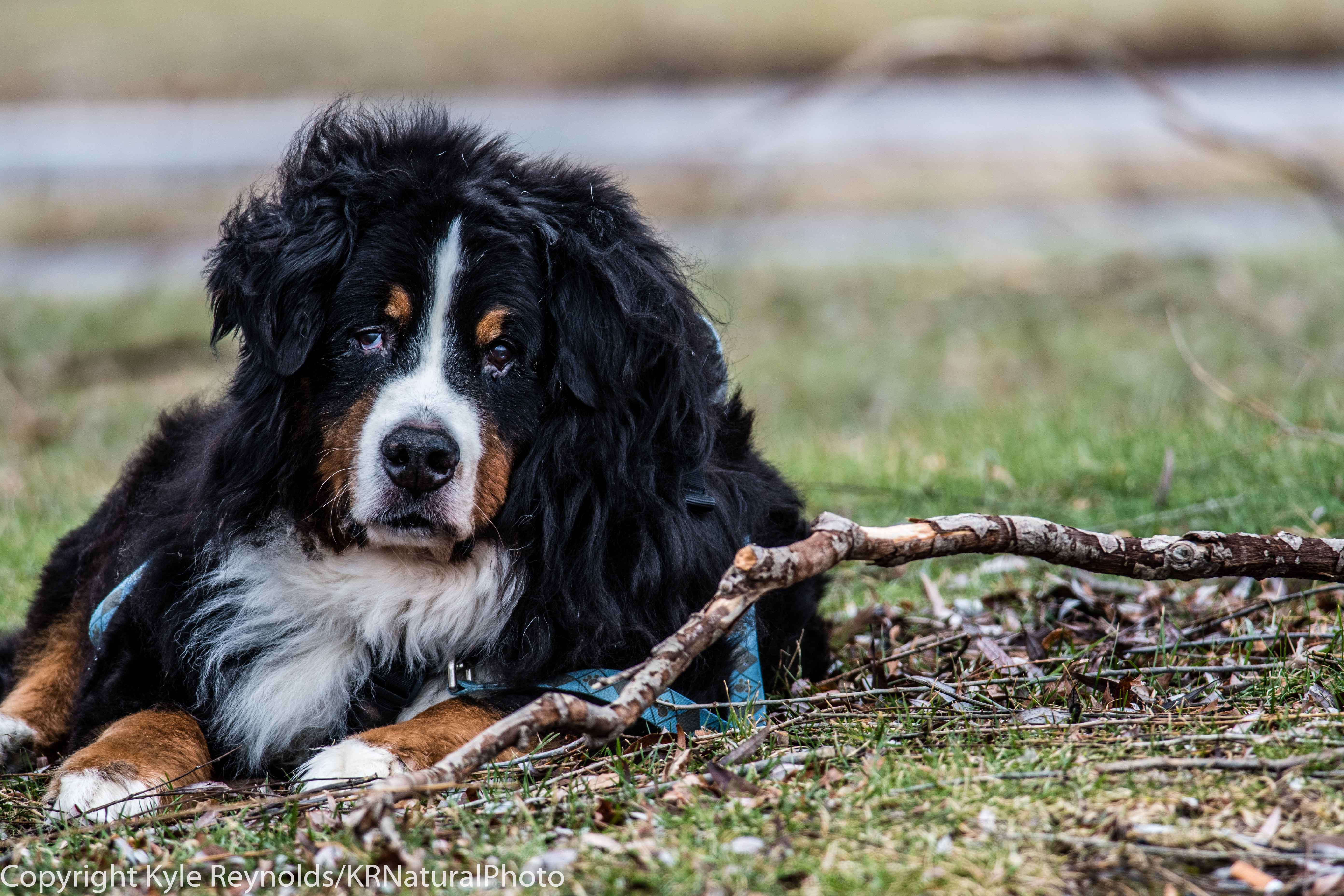 our-dogs_january-20-2017_69