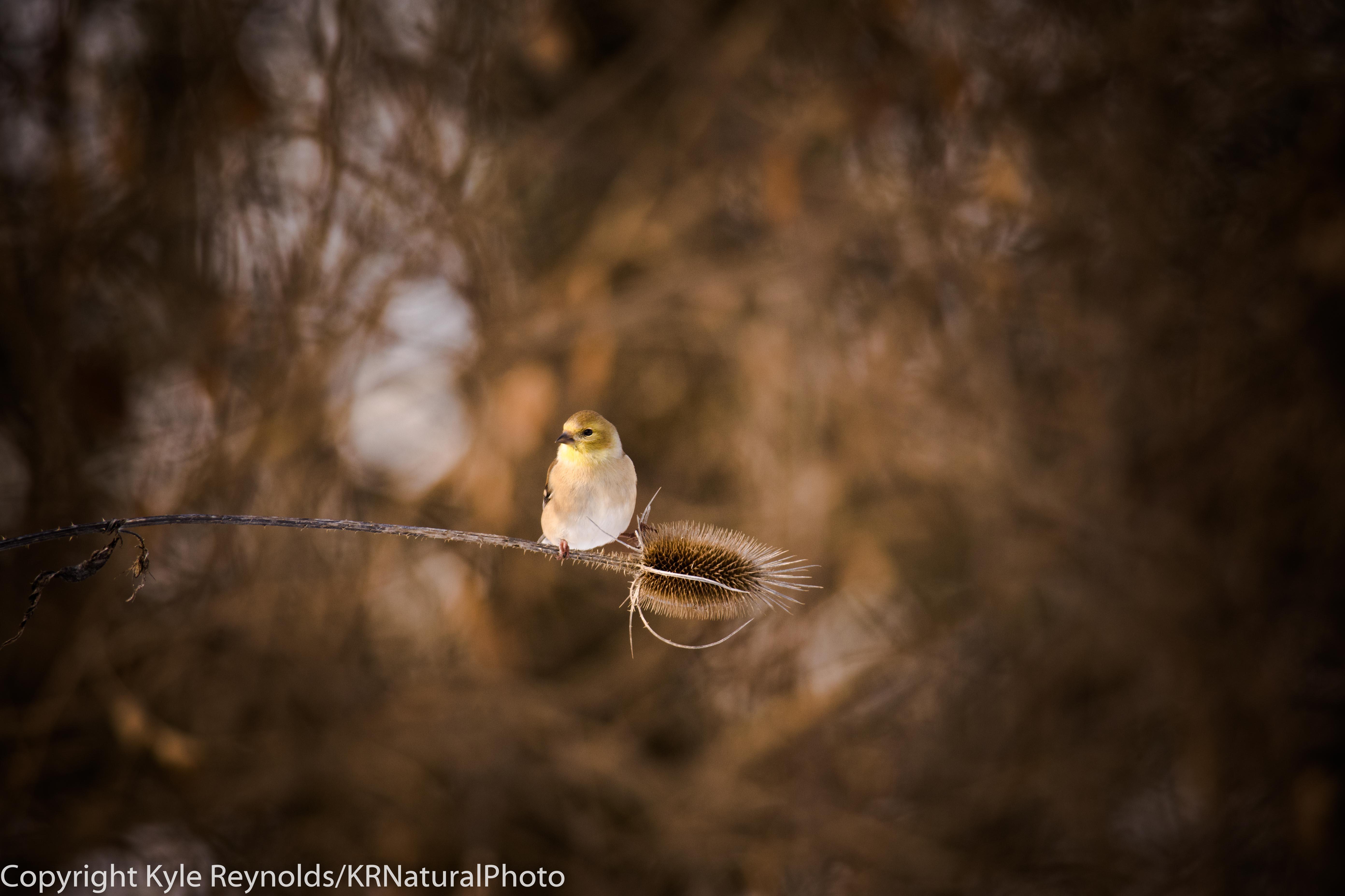 Cornell Lab of Ornithology_December 20, 2016_125