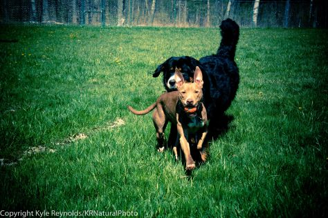 Our Dogs_April 26, 2017_59