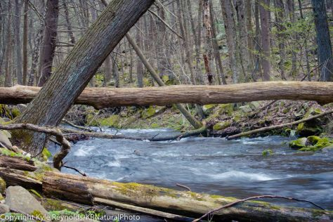 Ravensburg State Park, PA_April 24, 2017_95