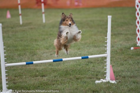 Wine Country Circuit Dog Show_September 29, 2017_1681