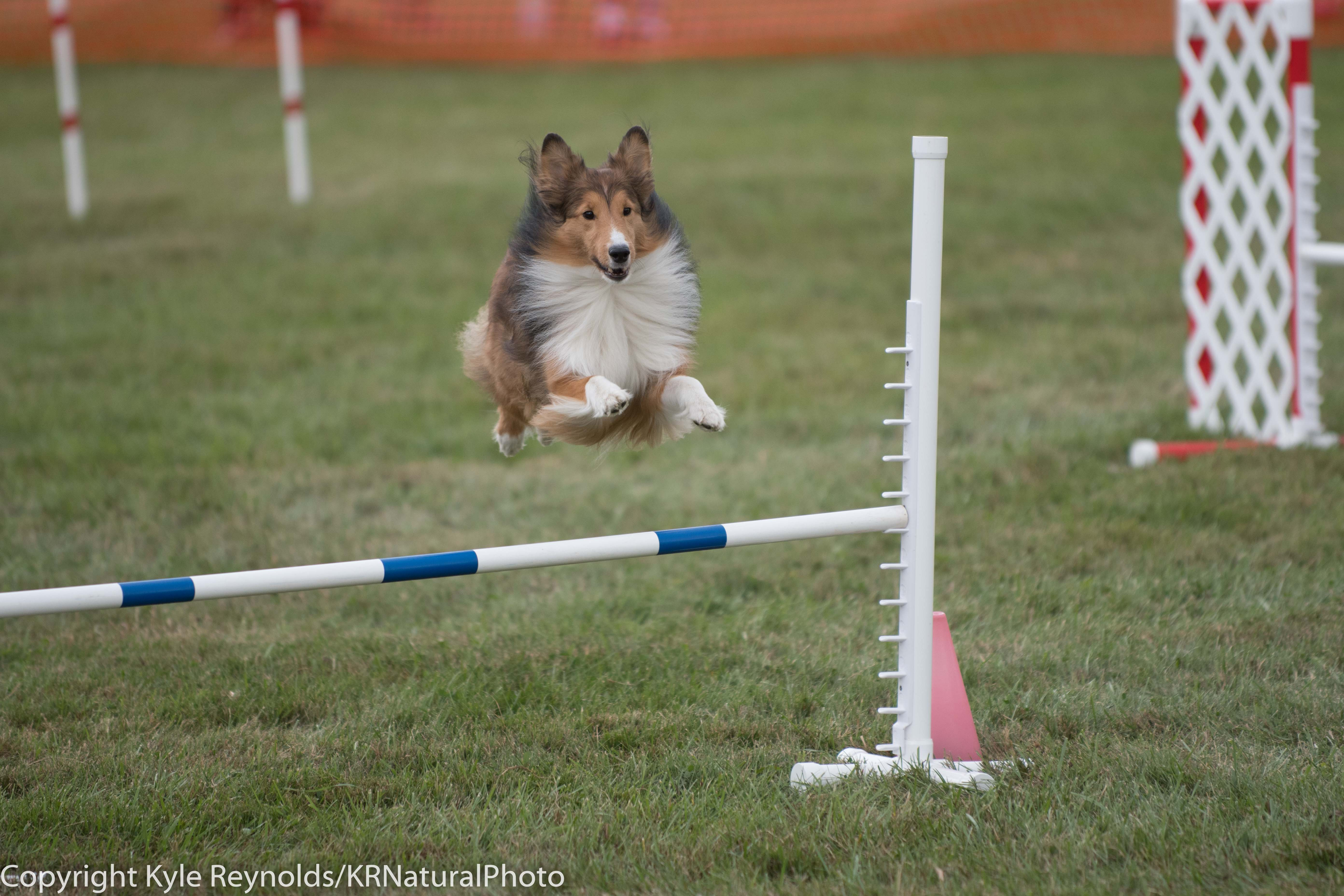 Wine Country Circuit Dog Show_September 29, 2017_1682