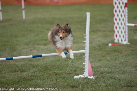 Wine Country Circuit Dog Show_September 29, 2017_1683