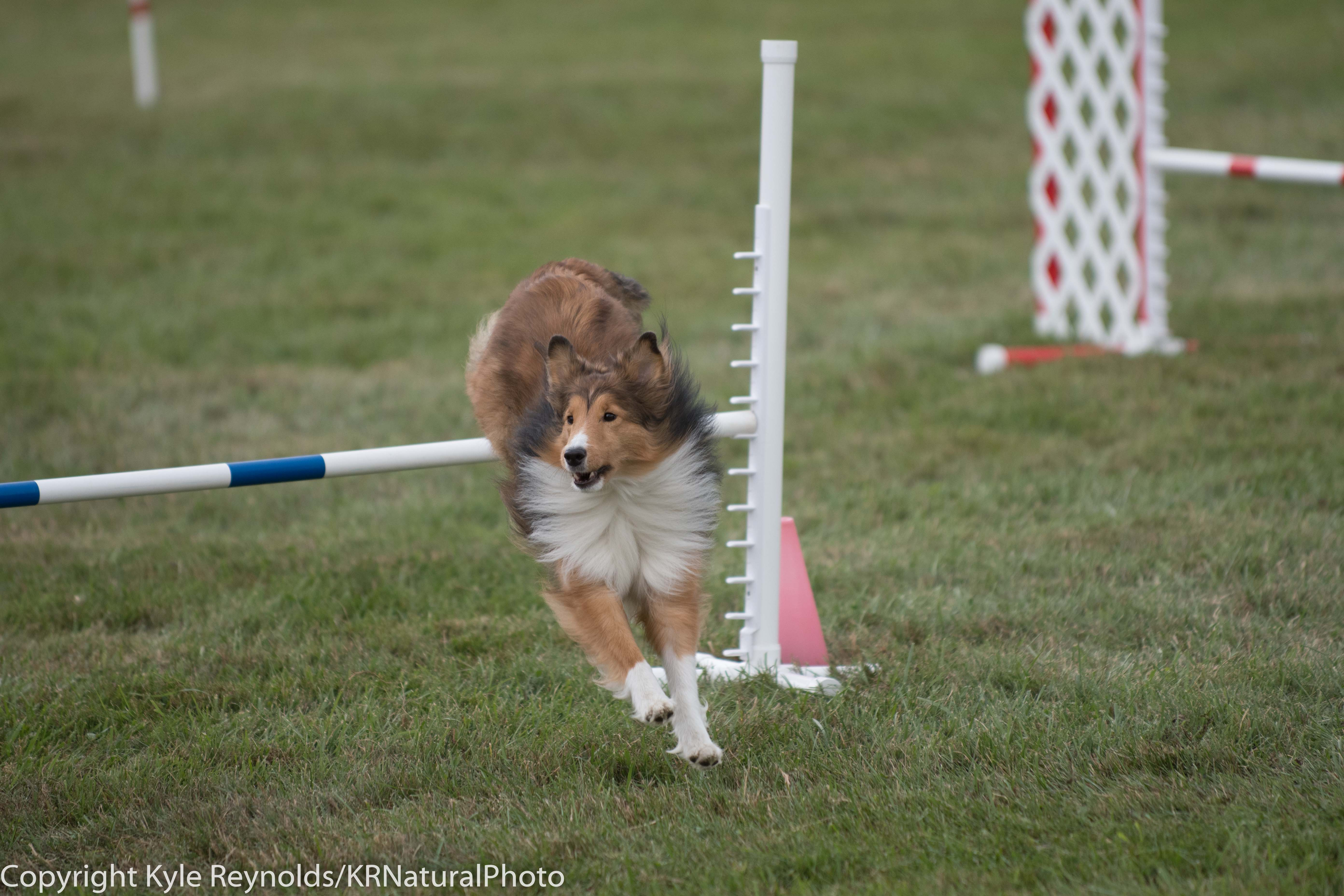 Wine Country Circuit Dog Show_September 29, 2017_1684