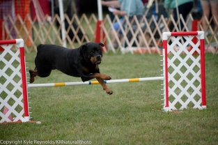 Check out this series of images of this Rottweiler clearing a hurdle.