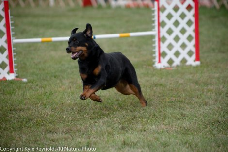 Wine Country Circuit Dog Show_September 29, 2017_1931