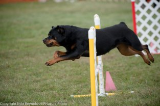 Wine Country Circuit Dog Show_September 29, 2017_1932