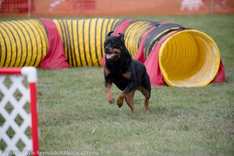 Wine Country Circuit Dog Show_September 29, 2017_1938