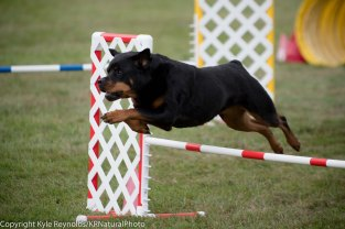 Wine Country Circuit Dog Show_September 29, 2017_1939