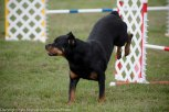 Wine Country Circuit Dog Show_September 29, 2017_1941