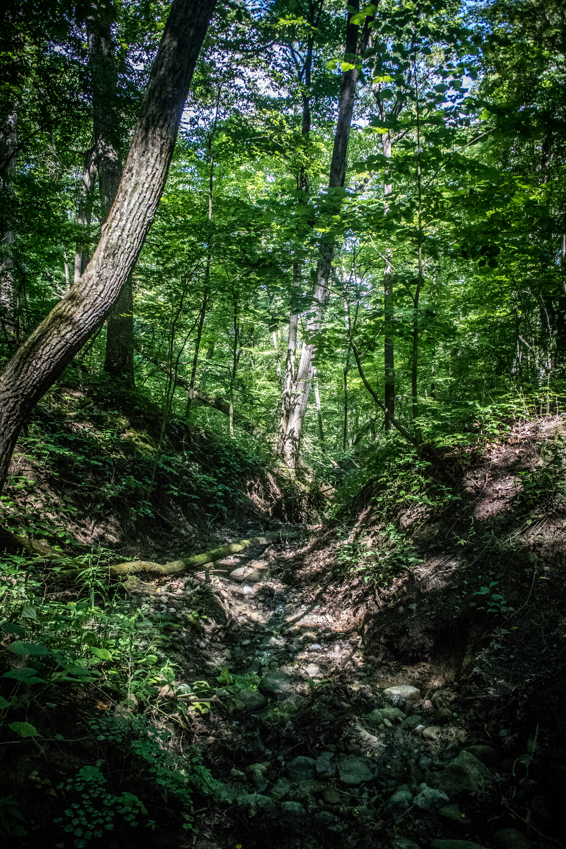 Dam Good Trail Race_August 13, 2017_25