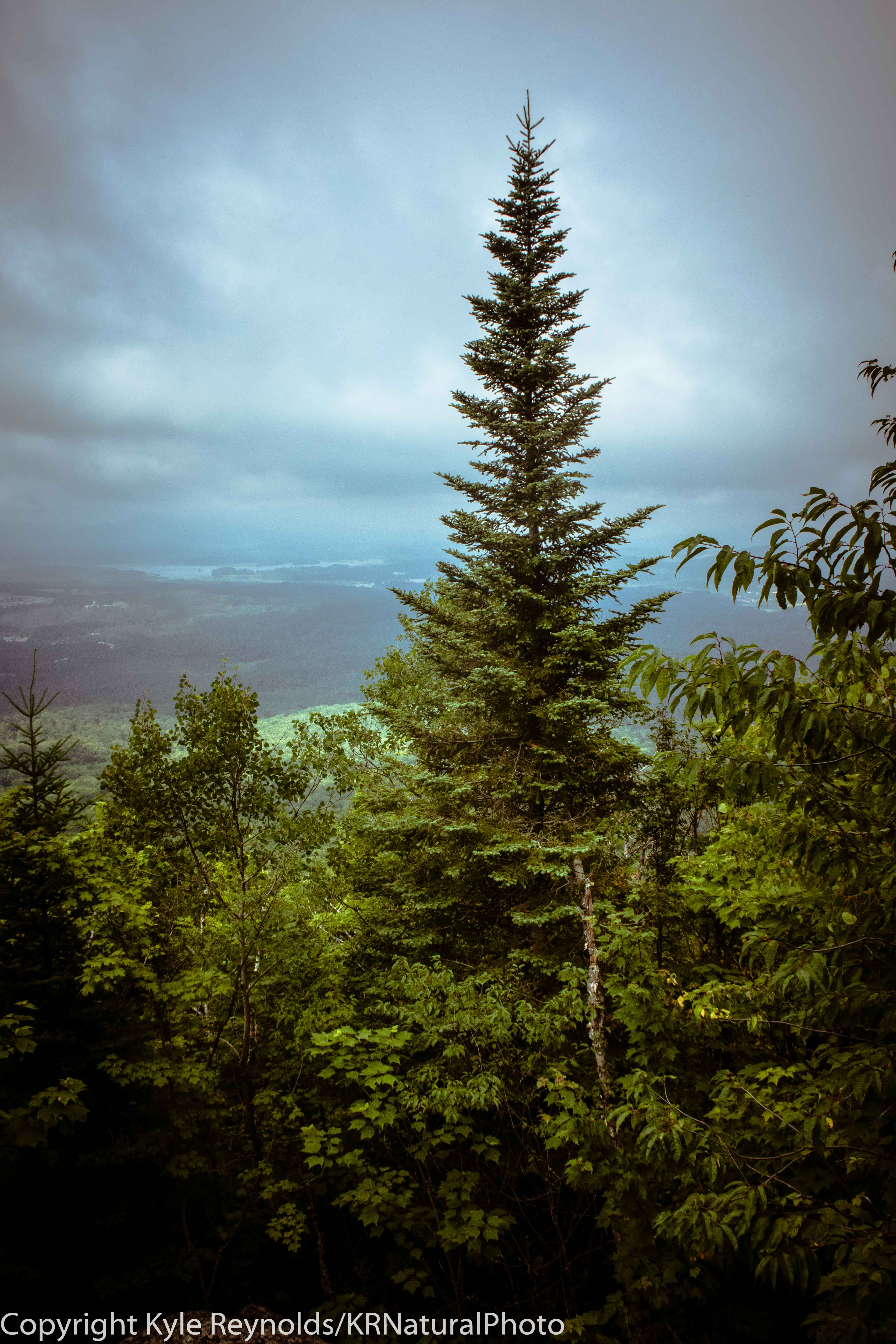 Haystack Mountain_July 15, 2018_115