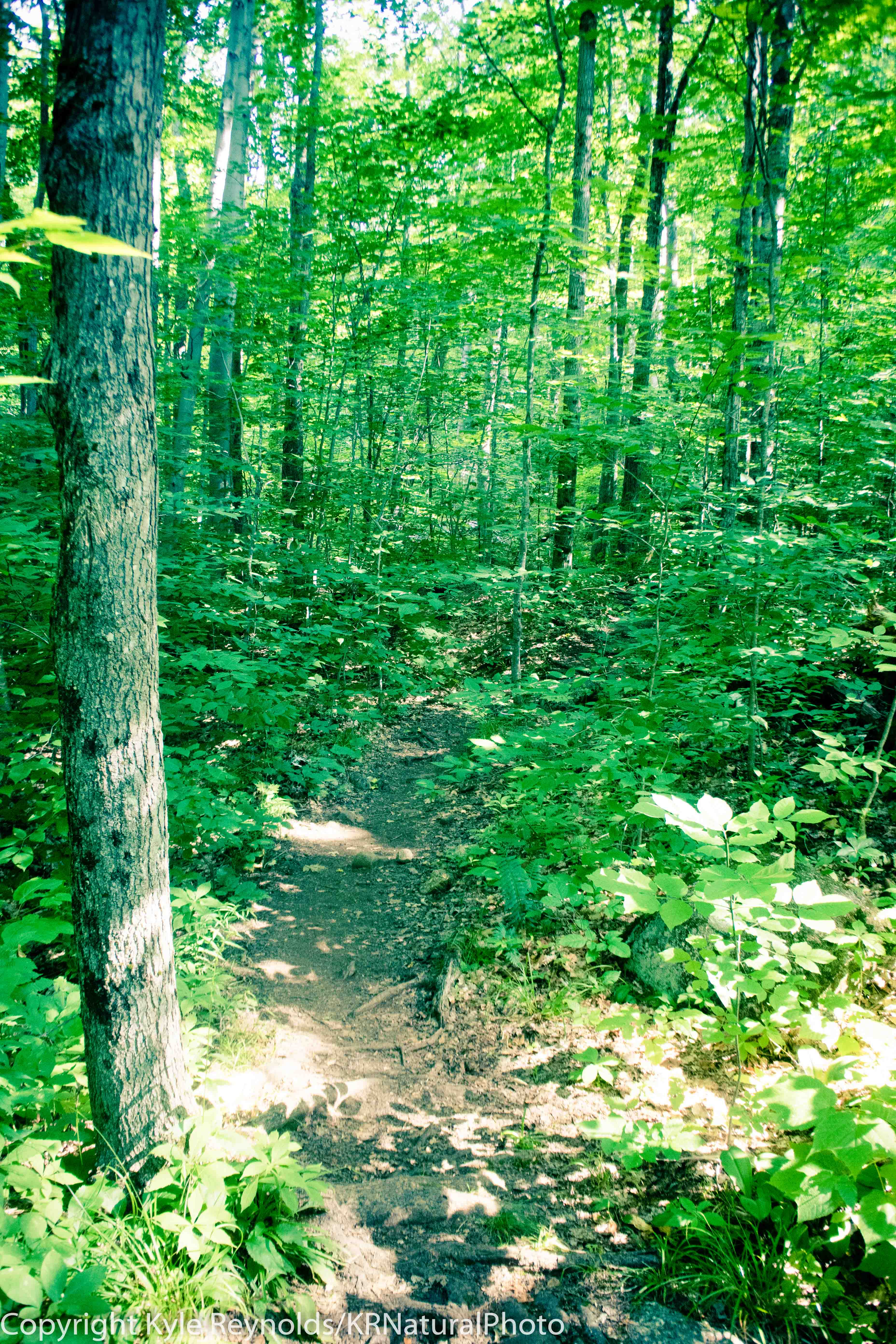 Haystack Mountain_July 15, 2018_137