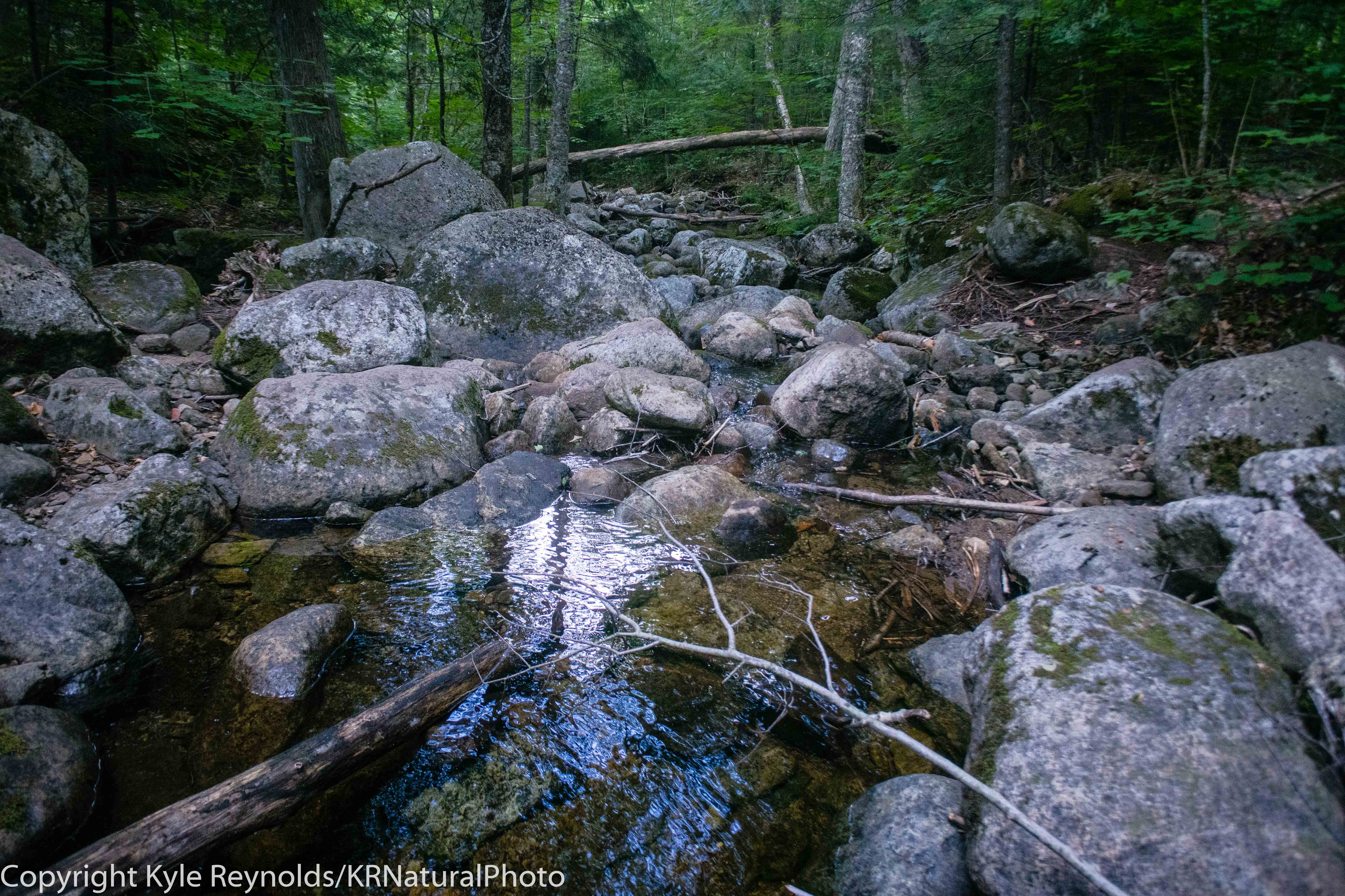 Haystack Mountain_July 15, 2018_169
