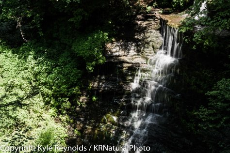 Leonard Harrison State Park PA_July 29, 2015_141