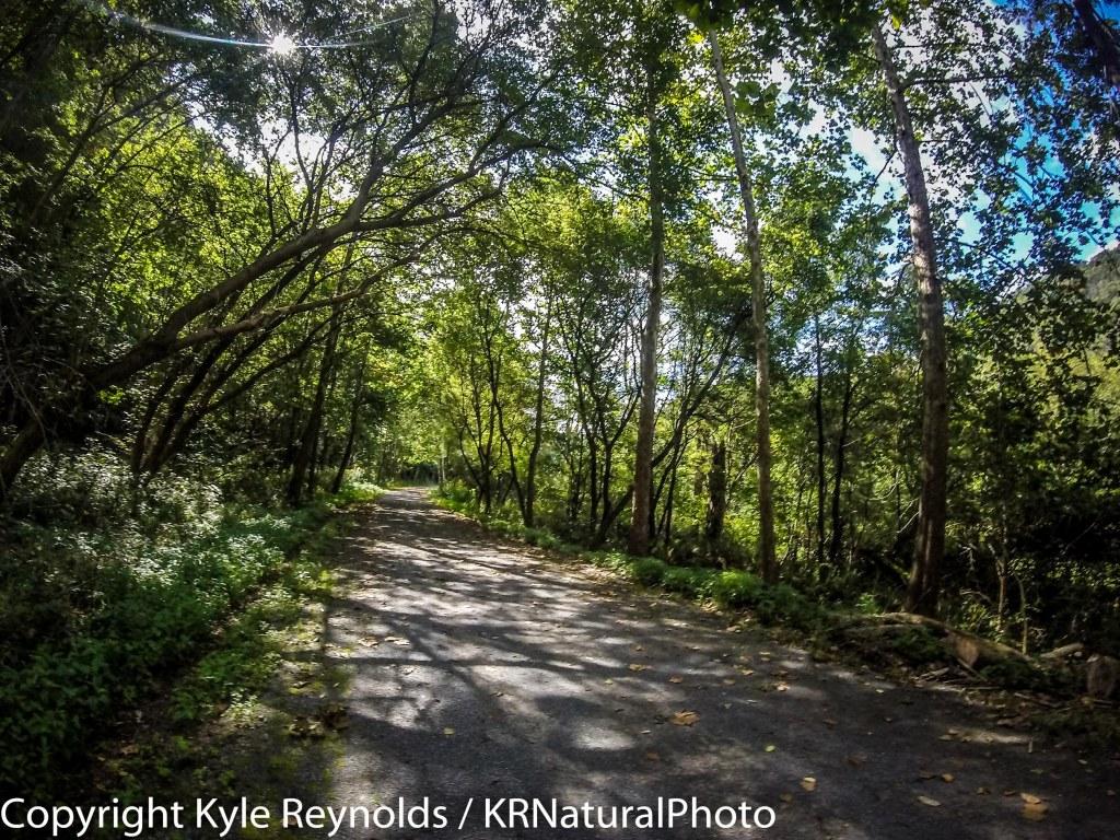 running - krnaturalphoto's Blog